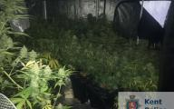Cannabis factory in Dover
