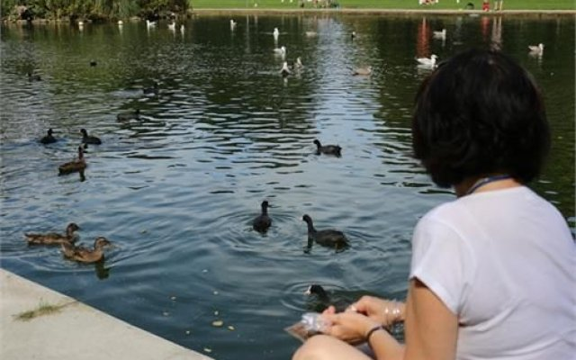 New initiative reminds people bread can be bad for ducks